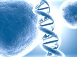 Activación del ADN