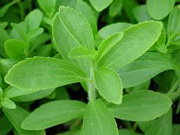 Stevia, un edulcorante a prueba de diabetes