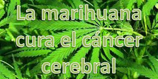 4 estudios demuestran que la marihuana puede curar el cáncer cerebral
